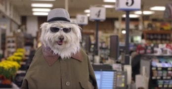 """Help Get the """"Doritos Dogs"""" Commercial Shown During Super Bowl 50!"""