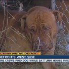 Dog Reunited With Family After House Fire Thanks to News Cast