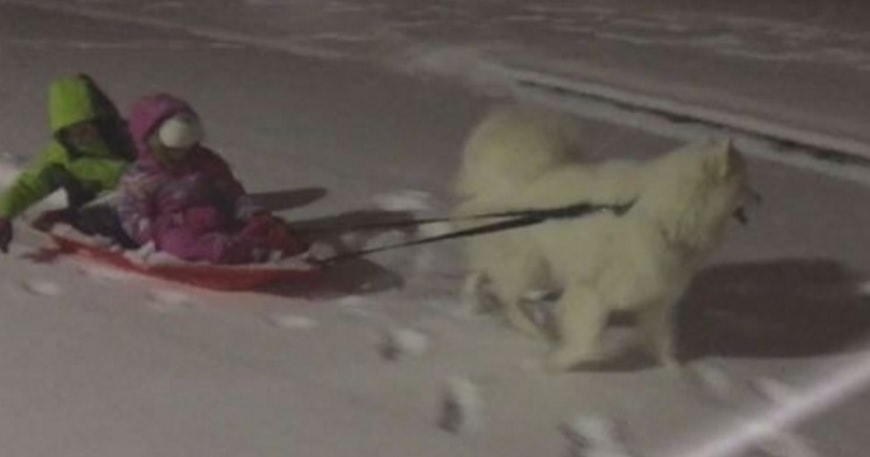 Dog Totes Little Kids Through Blizzard on Sled