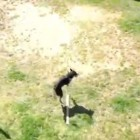 This Dog Is Better at Double Dutch Than Most Humans!
