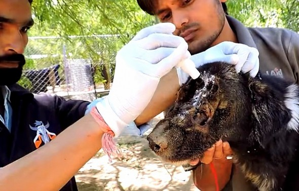 1.27.16 - Dog Miraculously Grows a New Face Thanks to Rescuers3