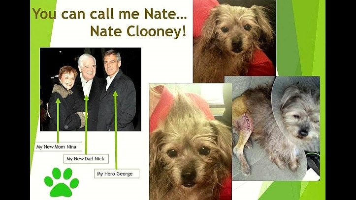 George Clooney Adopts ANOTHER Dog – This Time, for His Parents