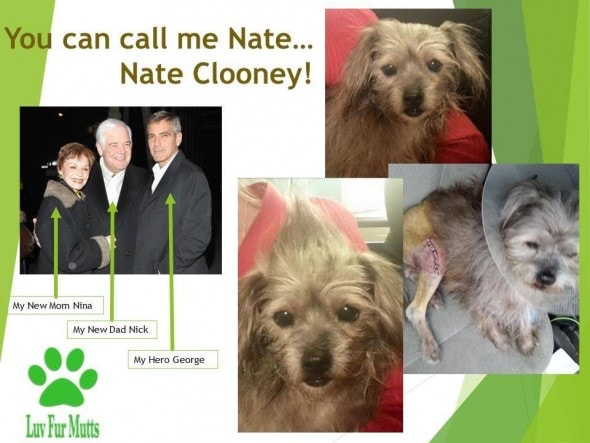 1.27.16 - George Clooney Adopts Another Dog - For His Parents1