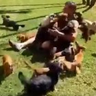 "Man Redefines the Term ""Dog Pile"""