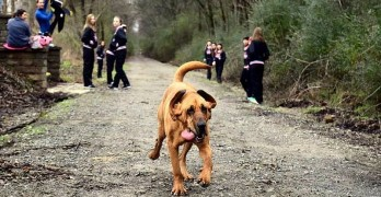 Dog Is Let Out to Go Potty, She Runs Half Marathon Instead