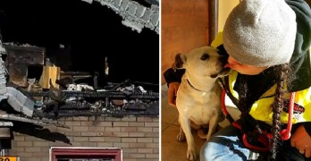 Dog Living in Burned-Out Detroit Home Rescued