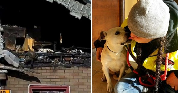 1.29.16 - Dog Living in Burned-Out Detroit Home Rescued0