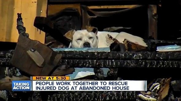 1.29.16 - Dog Living in Burned-Out Detroit Home Rescued2