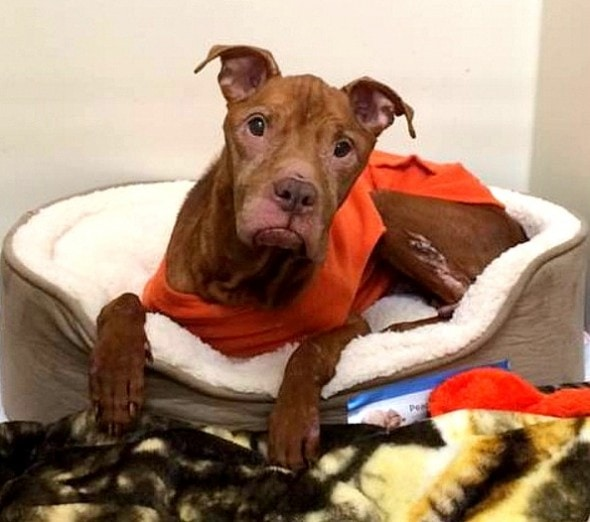 1.29.16 - Rescue Group Makes Bucket List for Dog Who's Spent Life in a Cage1