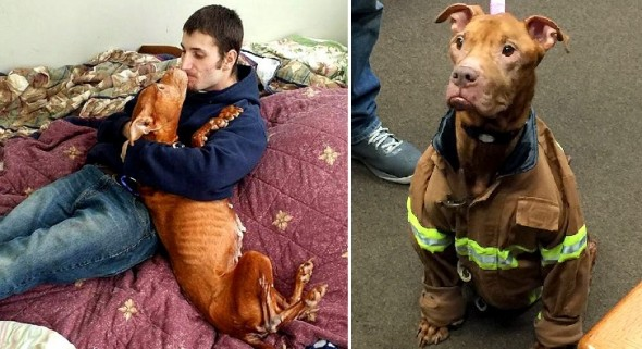 1.29.16 - Rescue Group Makes Bucket List for Dog Who's Spent Life in a Cage6