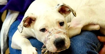 Badly Abused Puppy Wanders into the Right Yard on Christmas Day