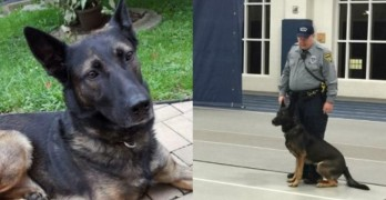 Handler Fighting to Adopt Retired K9 Officer City Wants to Auction