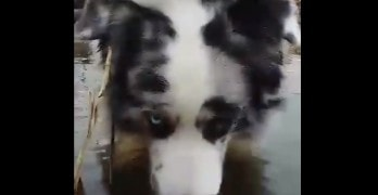 Dog Blowing Bubbles in the Pond