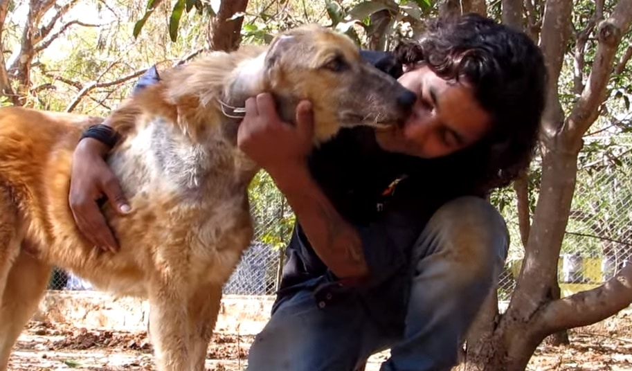 Rescue and Transformation of Senior Street Dog from India