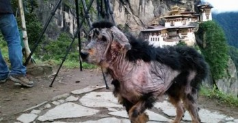Incredible Rescue and Transformation of Dog Found Covered in Mange