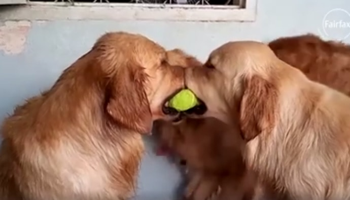 Best Viral Animal Clips of 2015