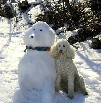 12.12.15 - Snow Sculptures12