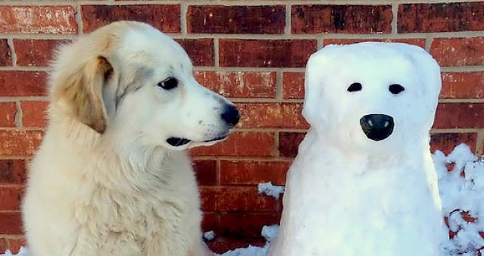 Truly Awesome Snow Sculptures of Dogs