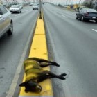 Lazy City Workers Paint Over Dead Dog