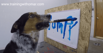 Dog Knows How to Spell His Name – Sort Of