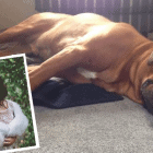Newlyweds Cancel Honeymoon to Search for Their Lost Dog