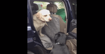 Dog Helps Senior Buddy Exit Car