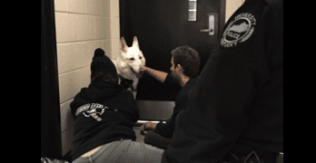 Dog Goes to College and Gets Rescued
