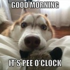 Ten Ways Your Dog Is Better Than Your Alarm Clock