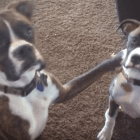Five Questions Pet Owners Ask Their Dogs