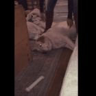 Dog Refuses to go Outside