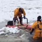 Dog Goes on Winter Wonderland Walk and Falls Through Thin Ice