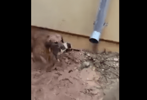 First puppy saved. Photo credit: YouTube