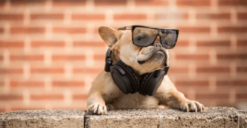 People Are Not the Only Ones Who Love Music, Dogs Do Too