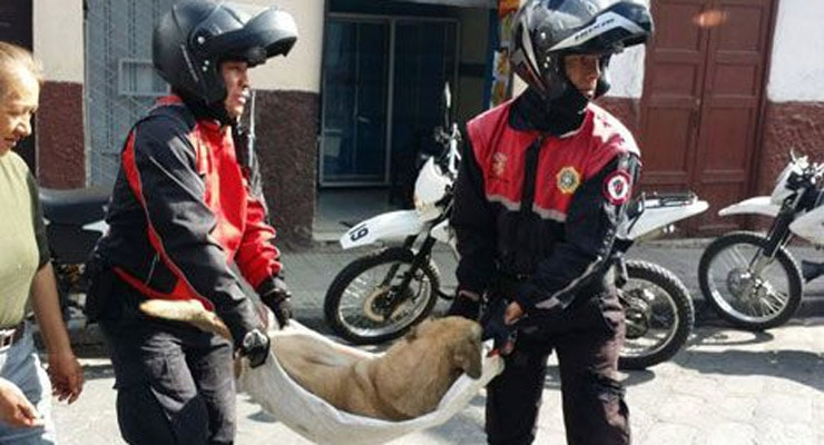 Street Dog Hit By Car Is Saved By Unexpected Rescuers
