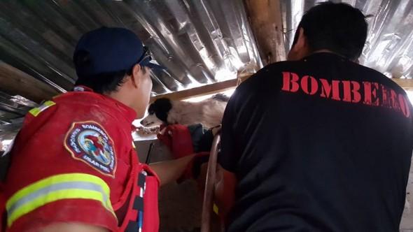 Photo credit: Brigada Rescate de Mascotas - Cusco/Facebook