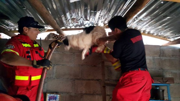 Photo credit: Brigada Rescate de Mascotas - Cusco/Facebook