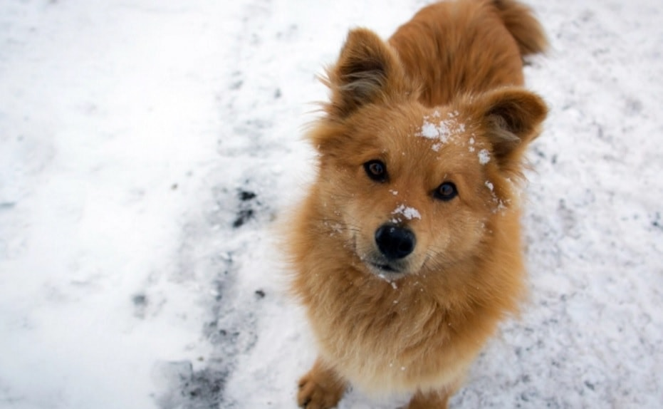 New York Residents to Face Stiff Penalties for Leaving Dogs in the Cold