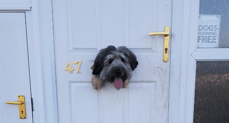 Mischievous Dog Eats Through Front Door