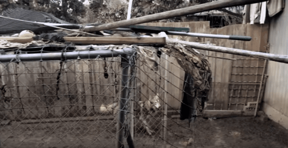 The Huskies poor living conditions. Photo credit: Greenhill Humane/YouTube