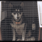 Getting surrendered. Photo credit: Greenhill Humane/YouTube