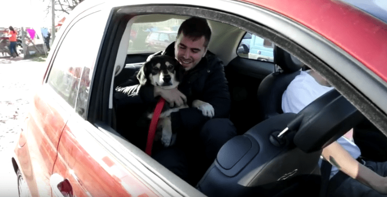 Homeless Dogs Find News Homes Thanks to Automaker
