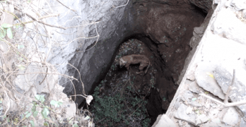 Crane Helps Rescuer Save Dog Trapped in Well