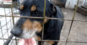 Senior Dog Goes from Caged and Forgotten to Loved and Pampered
