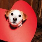 10 Reasons Why Dogs Make Better Valentines Than Humans Do