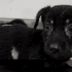 Lifeless Puppy Pulled from Underground Makes Amazing Recovery