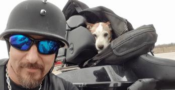 Biker Saves Dog Abandoned on Highway and Makes Him Co-Pilot