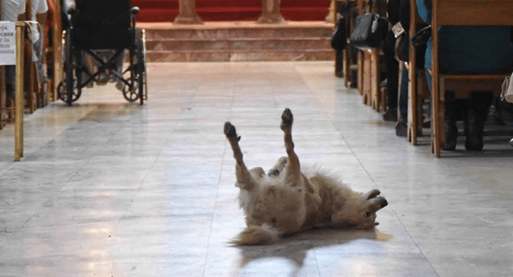 """Dog Goes to Church and """"Prays"""" with Children"""