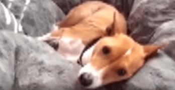 Dog Refuses to Wake Up and Start the Day