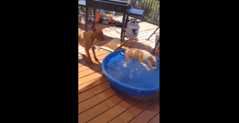 Puppy Discovers Jumping into Water Is Fun