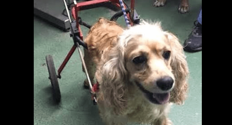 Paralyzed Dog Gets Wheels Taken Away Before Getting Dumped at Shelter